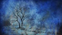Apocalypse (jbarc in BC) Tags: tree apocalypse dead climate cold death road cloud mist poles storm change texture textured