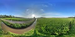 Rice Fields In a village far from the city. 🌾️ (fajar_djoekerz1) Tags: ricefields indinesia bali ubud jakarta androidcamera scenery world beautiful 360°view flickrscenery village sunrise