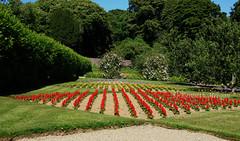 Colclough Walled Garden (Ken Meegan) Tags: colcloughwalledgarden tinternabbey saltmills cowexford walledgarden garden 1762017