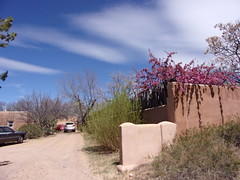 100_0615 (f l a m i n g o) Tags: albuquerque nm santafe newmexico trip april 2018