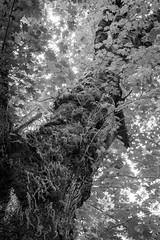 2018 Oregon - christopherallisonphotography-0840 (christopherallisonphotography) Tags: eugeneoregon covered bridge florence oregon waterfalls