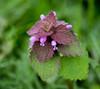 Off Spring. (Omygodtom) Tags: short wildflower forest smile flora tamron macro bokeh mist coth5 7dwf dof d7100 diamond