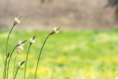 """""""Steli"""" (RM) (Stefano Innocenzi) Tags: fiori macro natura colori steli stupore infiorescenze"""