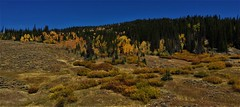 Autumn Meadows (The VIKINGS are Coming!) Tags: autumn foliage sky landscape mountains wyoming wilderness bridger teton greysriver spruce pine fir colors