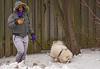 April Winter (fotofrysk) Tags: dogwalker dog fence aprilwinter snow sleeet icepellets street canada ontario thornhill cityofmarkham afsnikkor200500mm56eed nikond7100 201804171324