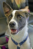 Rio (1) (AbbyB.) Tags: dog canine rescue adopt animal shelter pet mtpleasantanimalshelter easthanovernj petphotography shelterpet