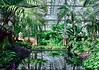 The Garfield Conservatory (elaminmachine) Tags: garfield conservatory chigago illinois plants greenhouse nature pond