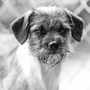 Nino24Mar2018171-Edit.jpg (fredstrobel) Tags: dogs pawsatanta phototype atlanta blackandwhite usa animals ga pets places pawsdogs decatur georgia unitedstates us