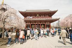 Senso-ji Temple (takashi_matsumura) Tags: sakura cherry blossoms spring tokyo nikon d5300 sensoji temple asakusa taitoku japan afp dx nikkor 1020mm f4556g vr