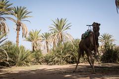 Foum Takkat © Sophie Bigo - SBGD 2018 (SBGD_SophieBigo) Tags: photography artdirector freelance sophiebigo morocco maroc trip traveler travelphotography trek desert sahara