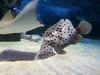 2018_03_SeaLife12 (GrazerX) Tags: sealife lochlomond aquarium fish scotland graemesimpson samsung galaxy s9 s9plus