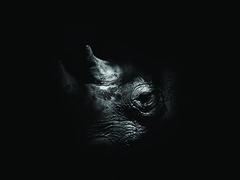 Rhino BW (FlynnLovesPhotography) Tags: rhinoceros rhino zoo animals wild wildlife cleveland ohio ohioexplored ohiogram namaste animal jade blackandwhite