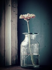 April 7th. Found Still Life. (Christine Dolan) Tags: flower bottle window