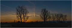 Sunset (rockheadz) Tags: sunset sonnenaufgang frühling springtime odenwald goldenestunde goldenhour sonyalpha6300 baum himmel