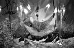(SamBHart) Tags: 35mmfilm analog bw bwfilm blackandwhite nikonfm2 24mmlens nikkor autobiographical summer self reflection weed farm weedfarm marijuana farming oregon 420