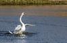 9Q6A8722 (2) (Alinbidford) Tags: alancurtis alinbidford brandonmarsh nature wildbirds wildlife muteswan