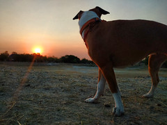 guza filosofando (Raul Pax) Tags: dog sunrise parque metropolitano guadalajara 2018 mascota pet laguna seca amanecer jalisco jal mex guadaljara guadalahara guadalaxara