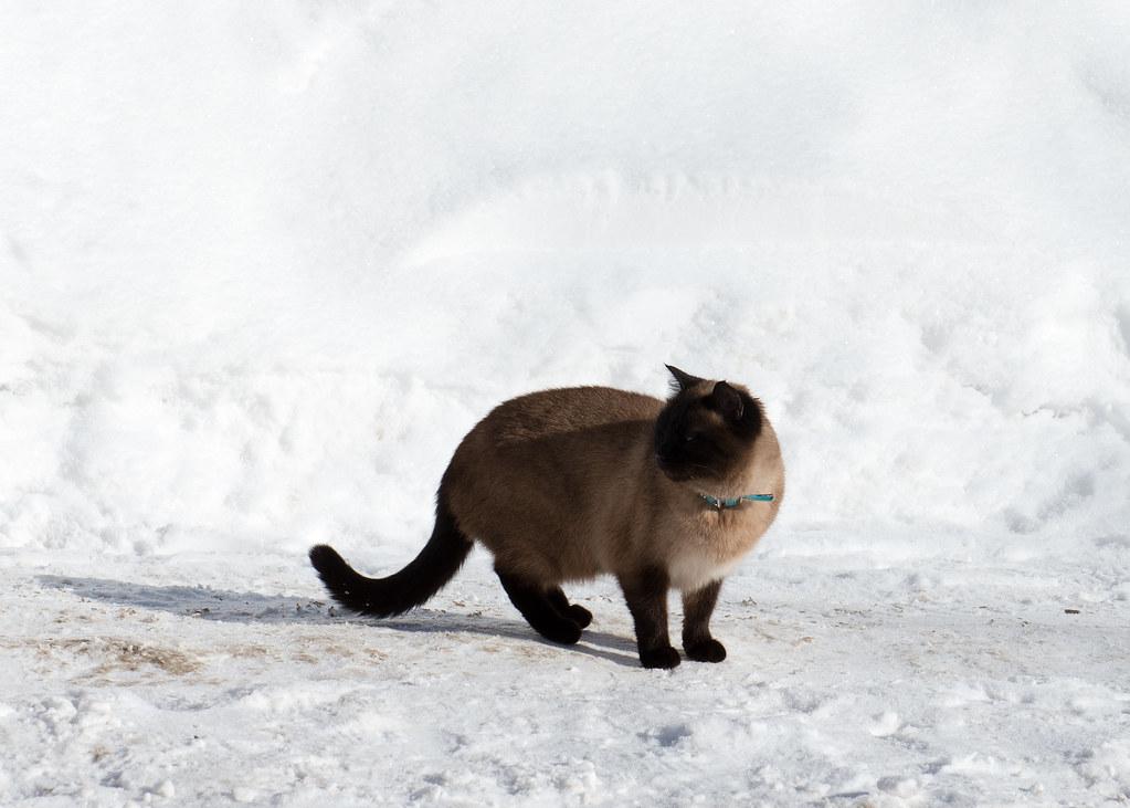 фото: Cat