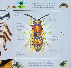 Build A Bug Learn More About Creepy Crawlies Book By Arcturus Holdings Limited London - 9 Of 12 (Kelvin64) Tags: build a bug learn more about creepy crawlies book by arcturus holdings limited london
