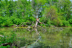 Help me I'm Drowning (kendoman26) Tags: hdr nikhdrefexpro2 tree treetrunk imcanal iandmcanal imcanaliandmcanal nikon nikond7100 tokinaatx1228prodx tokina tokina1228