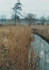 grey and blue tones in wet meadows (pancolar user) Tags: grey lightblue luznatural naturallight meadows wetland reed reedgrass softcolours pastelcolours softpastelcolours alders aldermarsh water misty contax contaxrts rts pentacon1850mm pentaconmc1850 pentacon50f18 pentacon pentacon50mm pentacon50 pentaconlenses filmislife filmshooters filmphotography analogiche fotografiaanalogica analogue analogphotography argentique фотопленка nature