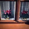 twin pots (g a r c í a) Tags: pots plants