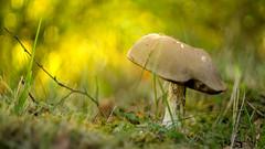The light of fall (- A N D R E W -) Tags: mushroom toadstool honga seta nature naturaleza otoño fall autumn light luz sunlight sun sol color colorful vibrant bokeh ricoh rikenon 50mm f2 dof depth field vintage manual focus sony alpha a6000 mirrorless