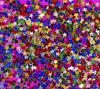 A little bit of color for a rainy day (WilliamND4) Tags: stars many tiny tokina100mmf28atxprod nikon d810