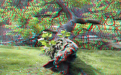 Het Park Rotterdam 3D (wim hoppenbrouwers) Tags: hetpark rotterdam 3d tree anaglyph stereo redcyan