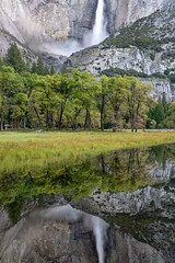 Vernal Reflection (Kirk Lougheed) Tags: california cooksmeadow usa unitedstates yosemite yosemitefalls yosemitenationalpark yosemitevalley forest landscape morning nationalpark outdoor park pond pool reflection spring vernal water waterfall