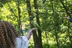 DSC_2171 (photographer695) Tags: wintrade rest recreation hyde park london feeding parakeet birds with nicole ross
