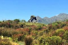 Sculpture (RobW_) Tags: dylan lewis sculpture garden paradyskloof stellenbosch western cape south africa tuesday 20mar2018 march 2018