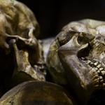 Skulls Of The Dead thumbnail