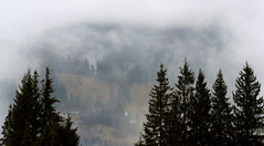 Ukraine/Carpathians (vinnserg 18) Tags: ukraine nature image outdoor landscape serene trees winter forest cold silence calmly recreation tree plant picea fog moss mist wood grass carpathians mountainside sky mountain snow