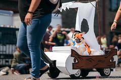 PugCrwal-94 (sweetrevenge12) Tags: pug parade crawl brewing sony pugs dog pet