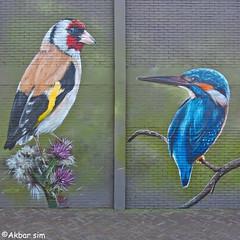 Bodegraven Street Art 5B (Akbar Sim) Tags: bodegraven holland nederland netherlands streetart mural urbanart 5b akbarsim akbarsimonse