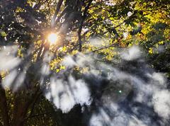 Backyard smoke (chinese johnny) Tags: iphone iphoneonly iphone7plus backyard autumn autumnfoliage fire burning smoke