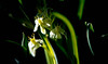 (bluebird87) Tags: flower c6 celestron kodak ektar nikon n90s film epson v800 dx0 c41 lightroom