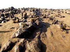 Cape Gross (FERROSETTE) Tags: otarie namibia cape gross