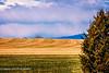 Freshly plowed (madzack385) Tags: colorado rural eaton agriculture farm farming weldcounty landscape