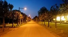 2016-05-11 25 Travemünde, Kaiserallee (kaianderkiste) Tags: germany schleswigholstein travemünde kaiserallee abends nixlos allee abendhimmel nachthimmel