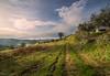 Una mattina di gioco tra luci ed ombre (Danilo Agnaioli) Tags: collinedelperugino umbria italia canon6d samyang14mm primavera natura cielo colline sole nuvole ombre olivi