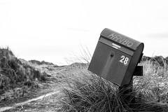 (Feininger's Cat (Thanks for 1.3 million views!)) Tags: meinfilmlab bessar3m summaritm50mmf24 leica 50mmffequiv film ilforddelta100 løkken jylland blackandwhite danmark scandinavia denmark jutland skandinavien analog fullframe leicasummaritm12450 summarit summarit50 50mm leicam rangefinder messsucher