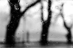 * (PattyK.) Tags: ioannina giannena giannina epirus ipiros balkans hellas ellada greece grecia griechenland march spring 2018 nikond3100 snapseed amateurphotographer blackandwhitephotography monochrome blackandwhite europe europeanunion ιωάννινα γιάννενα γιάννινα ήπειροσ βαλκάνια ελλάδα ευρώπη ευρωπαικήένωση άσπροκαιμαύρο λίμνη παμβώτιδα λίμνηπαμβώτιδα λίμνηιωαννίνων παραλίμνιο μώλοσ lake pamvotida lakepamvotida ioanninalake lakeside lakefront waterfront bythelake water μάρτιοσ άνοιξη rain raindrops rainyweather βροχή βροχερόσκαιρόσ σταγόνεσ δέντρα trees