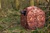 Affut (Phil du Valois) Tags: affut chasse camo camuflage photographe animalier naturaliste tragopan tente