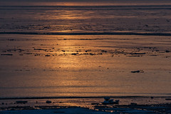 icy north-sea in winter (nr) (jotka*26) Tags: northsea sunset golden nature nordsee jotka26 berlin germany frozen waves ice landscape seascape whentheworldisafrozenmass eiszeit