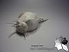 Venus Comb Murex (Rydos) Tags: paper origami art hanji koreanpaper korean paperfold fold folding paperfolding designed design model papermodel korea origamilst kamiyasatoshi kamiya satoshi venus comb mure venuscombmurex clam shell conch