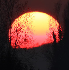 Sunny day (Robyn Hooz (away)) Tags: sole sun sunny padova sereno pasquetta alberi trees branches luce disk sunset