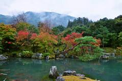 Tenryuji's temple garden (zlaia pirania) Tags: japan kyoto 天龍寺 colorful autumn pond foliage asia zen outdoor garden tenryujitemple