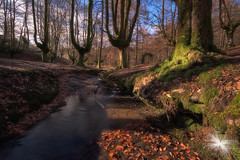 Otzarreta 2. (Javier Colmenero) Tags: bizkaia euskadi filtrohaidan1000 nikon nikond7200 otzarreta sigma sigma1020mm agua arbol bosque creek forest haya longexposure naturaleza nature photonature riachuelo tree water arratianervión españa es